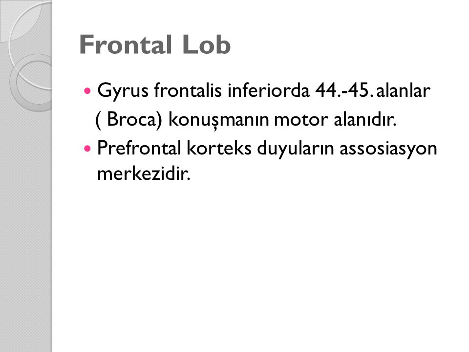 Frontal Lob Gyrus frontalis inferiorda 44.-45. alanlar
