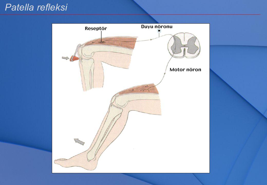 Refleks arkının bileşenleri