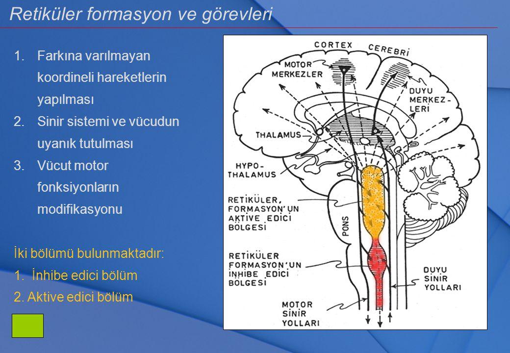 Beyin bölgeleri MYELENCEPHALON Medulla oblangata Retiküler formasyon
