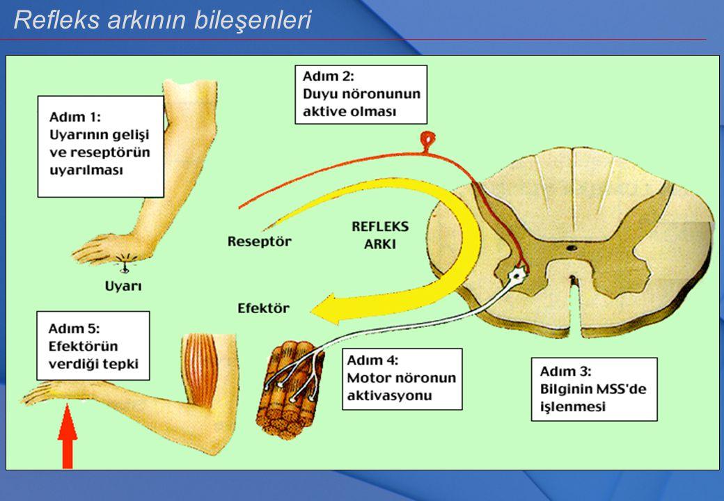 Medulla spinalis ve görevleri