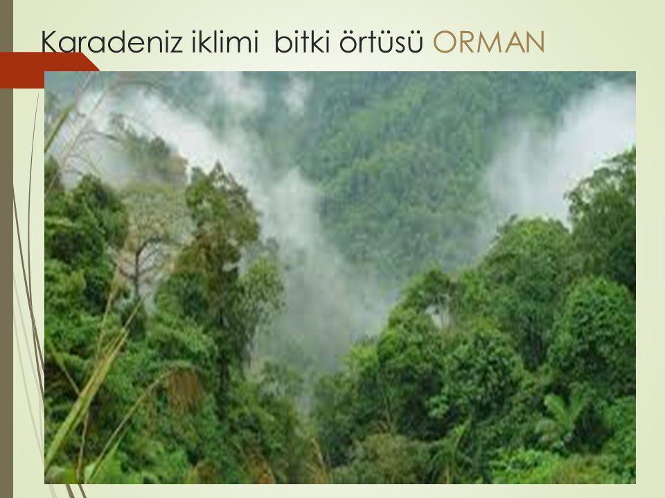 Karadeniz iklimi bitki örtüsü ORMAN
