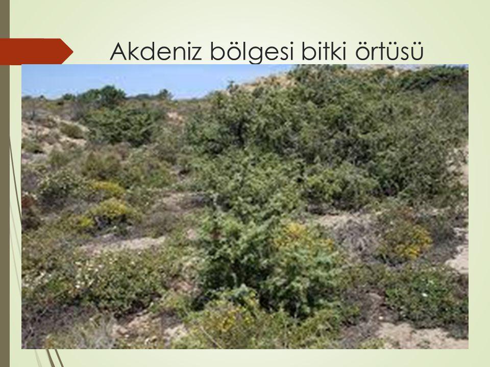 Akdeniz bölgesi bitki örtüsü MAKİ
