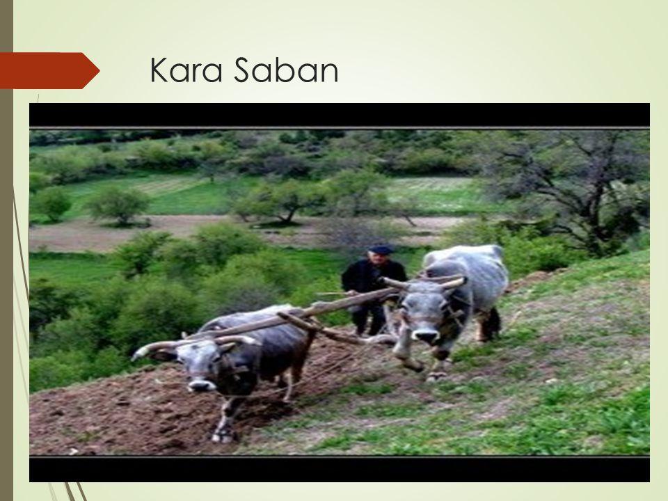 Kara Saban