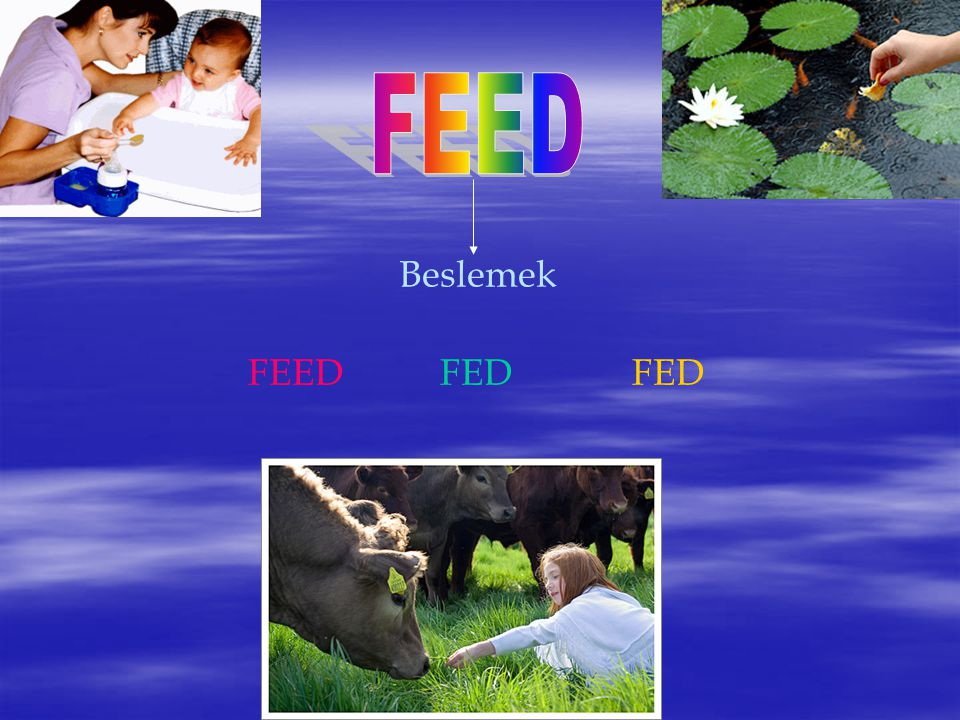 FEED Beslemek FEED FED FED