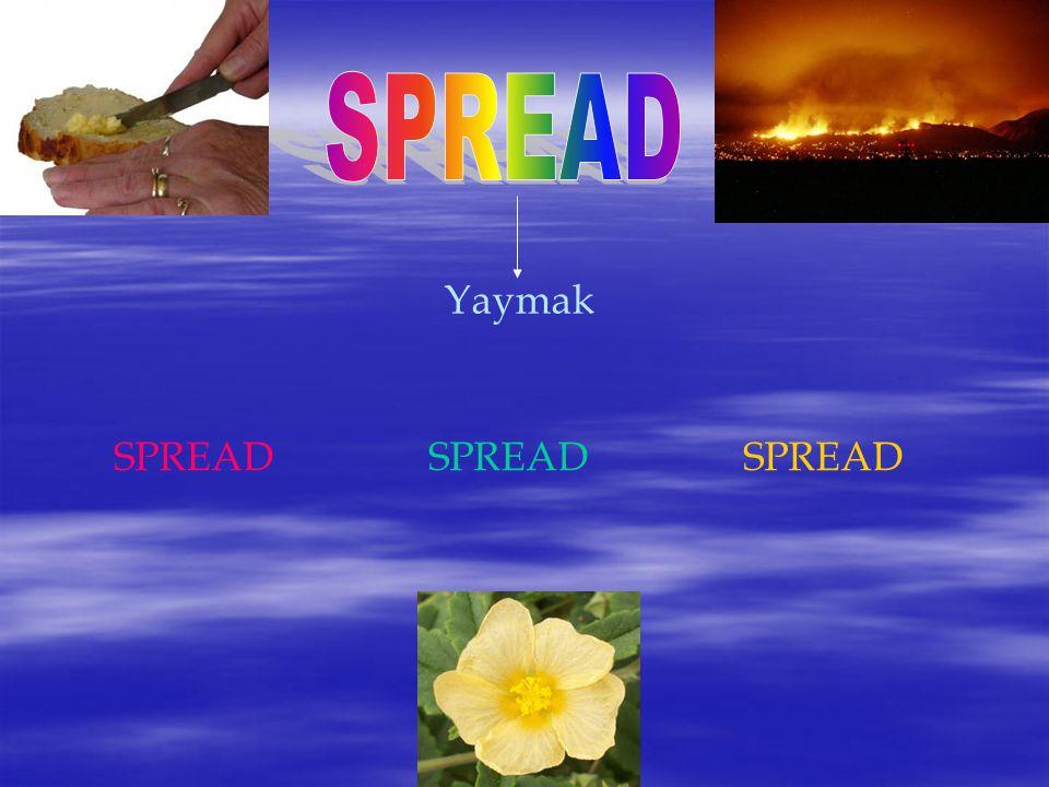 SPREAD Yaymak SPREAD SPREAD SPREAD