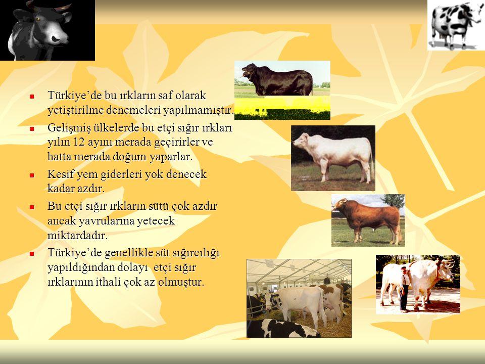 Türkiye'de bu ırkların saf olarak yetiştirilme denemeleri yapılmamıştır.