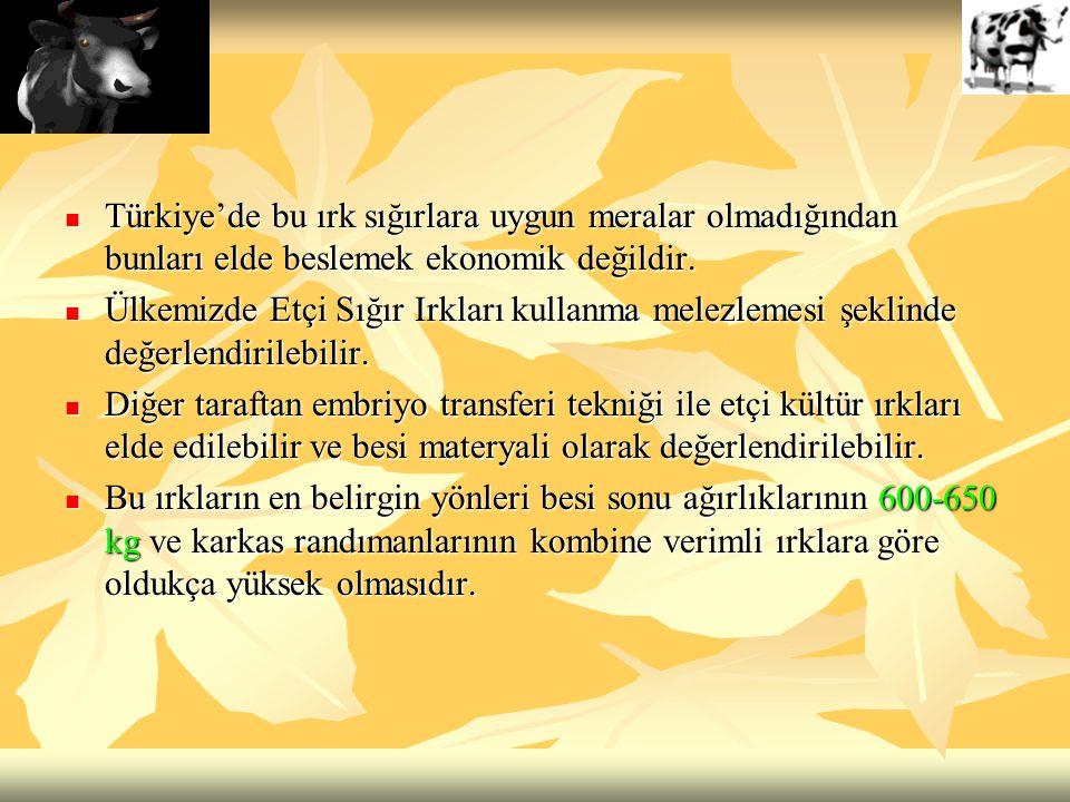 Türkiye'de bu ırk sığırlara uygun meralar olmadığından bunları elde beslemek ekonomik değildir.