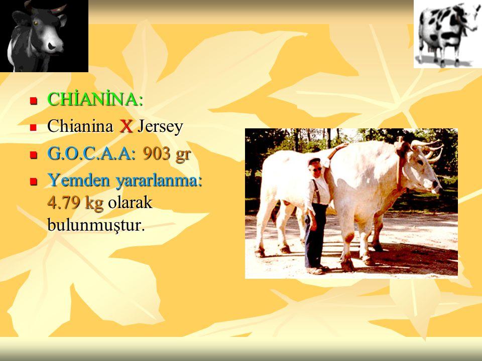 CHİANİNA: Chianina X Jersey G.O.C.A.A: 903 gr Yemden yararlanma: 4.79 kg olarak bulunmuştur.