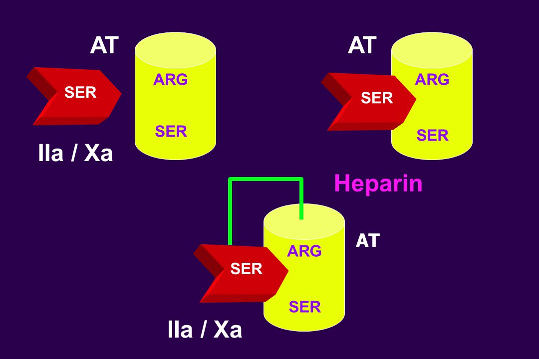 SER ARG AT IIa / Xa AT SER ARG SER Heparin SER ARG IIa / Xa AT SER
