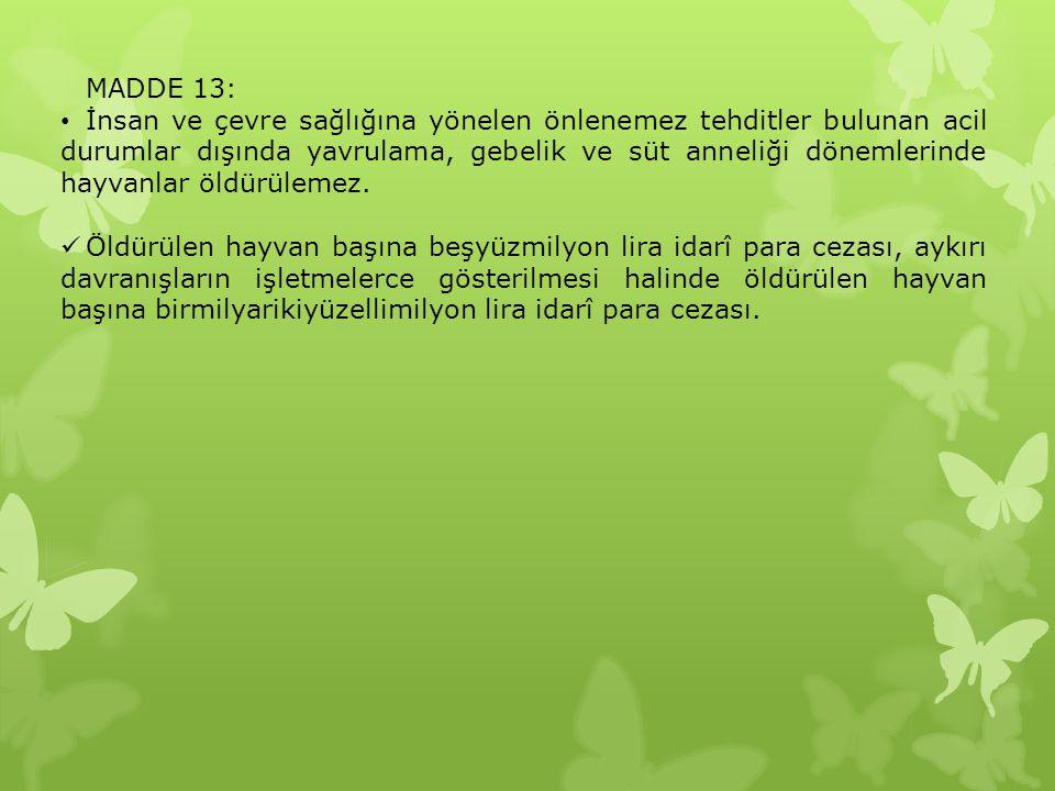 MADDE 13: