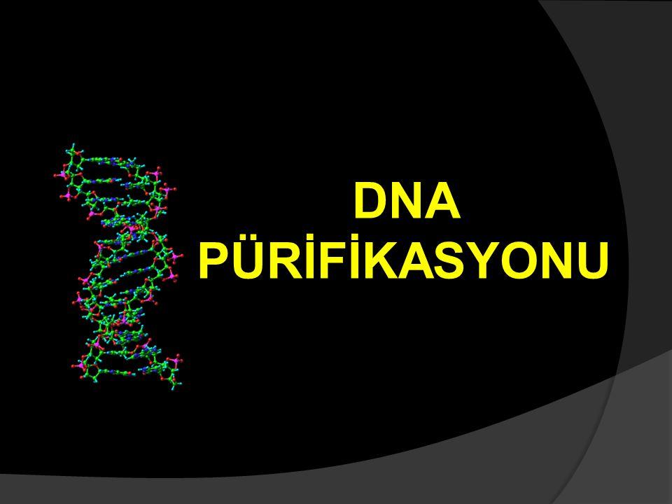 DNA PÜRİFİKASYONU