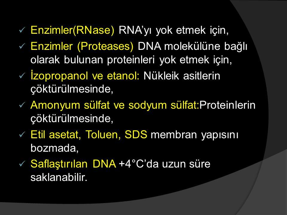 Enzimler(RNase) RNA'yı yok etmek için,