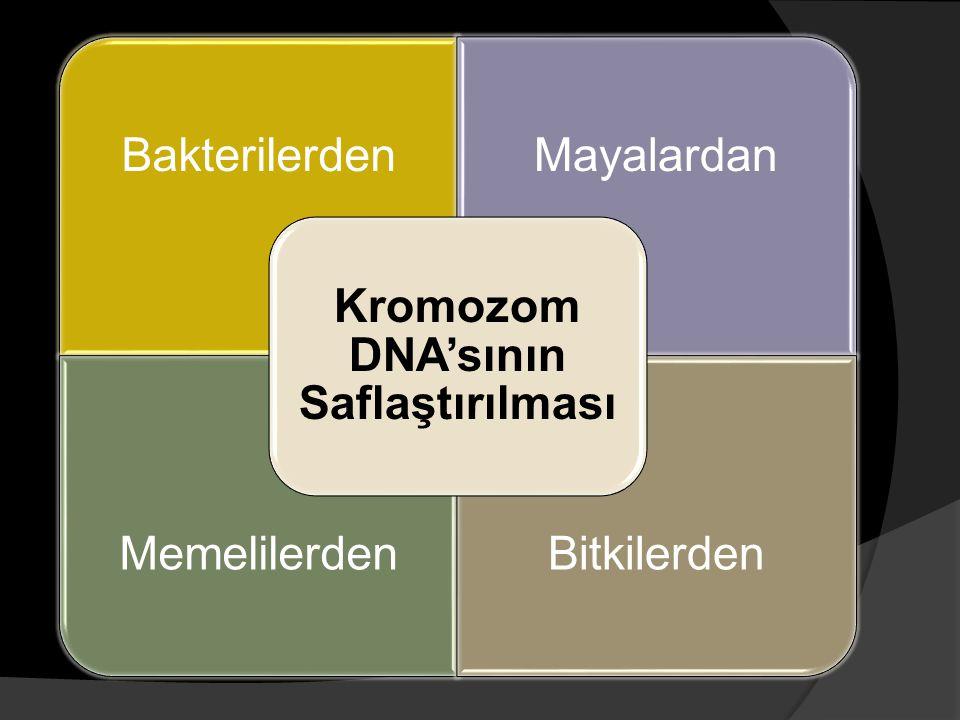 Kromozom DNA'sının Saflaştırılması
