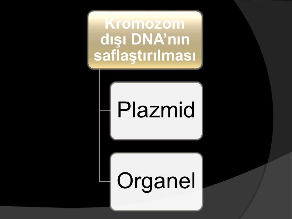 Kromozom dışı DNA'nın saflaştırılması