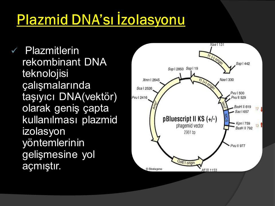 Plazmid DNA'sı İzolasyonu