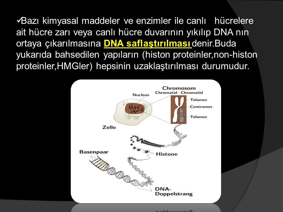 Bazı kimyasal maddeler ve enzimler ile canlı hücrelere ait hücre zarı veya canlı hücre duvarının yıkılıp DNA nın ortaya çıkarılmasına DNA saflaştırılması denir.Buda yukarıda bahsedilen yapıların (histon proteinler,non-histon proteinler,HMGler) hepsinin uzaklaştırılması durumudur.