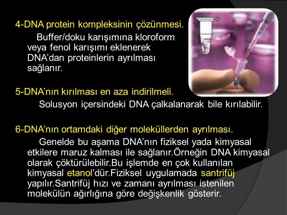 4-DNA protein kompleksinin çözünmesi.