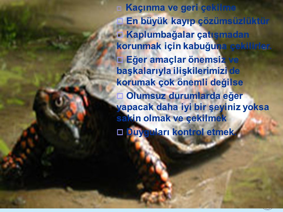 Kaplumbağa En büyük kayıp çözümsüzlüktür