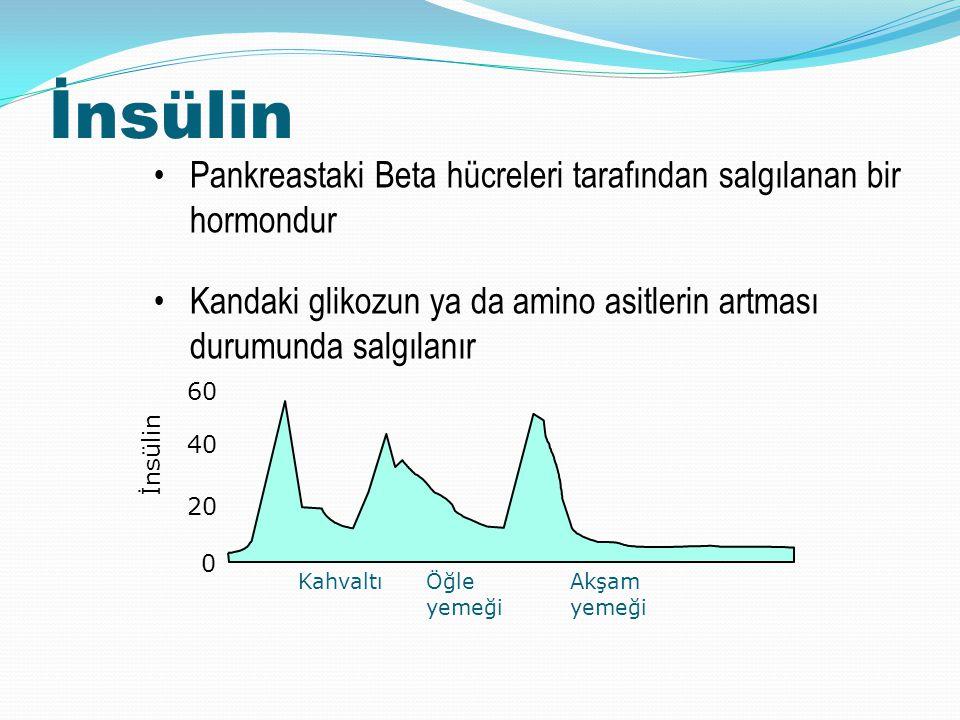 İnsülin Pankreastaki Beta hücreleri tarafından salgılanan bir hormondur. Kandaki glikozun ya da amino asitlerin artması durumunda salgılanır.