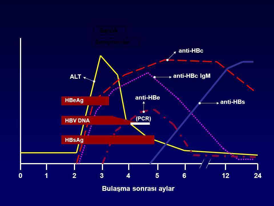 1 2 3 4 5 6 12 24 Bulaşma sonrası aylar Sarılık Semptomlar anti-HBc