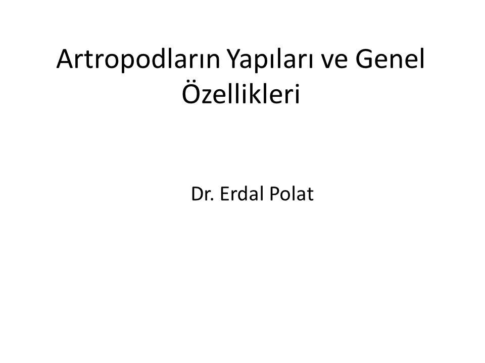 Artropodların Yapıları ve Genel Özellikleri