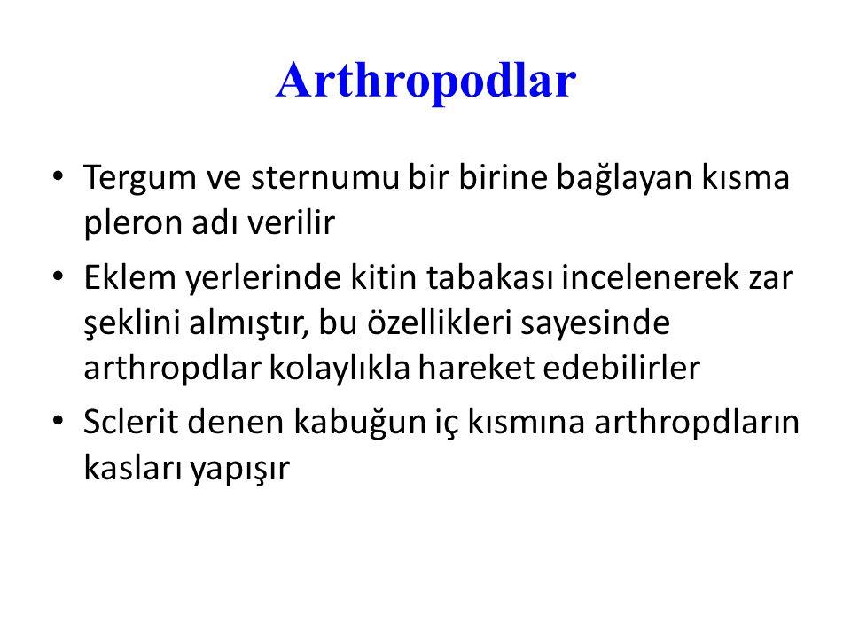 Arthropodlar Tergum ve sternumu bir birine bağlayan kısma pleron adı verilir.