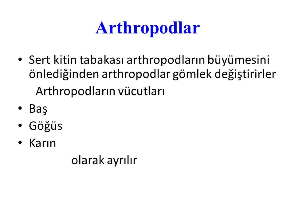 Arthropodlar Sert kitin tabakası arthropodların büyümesini önlediğinden arthropodlar gömlek değiştirirler.