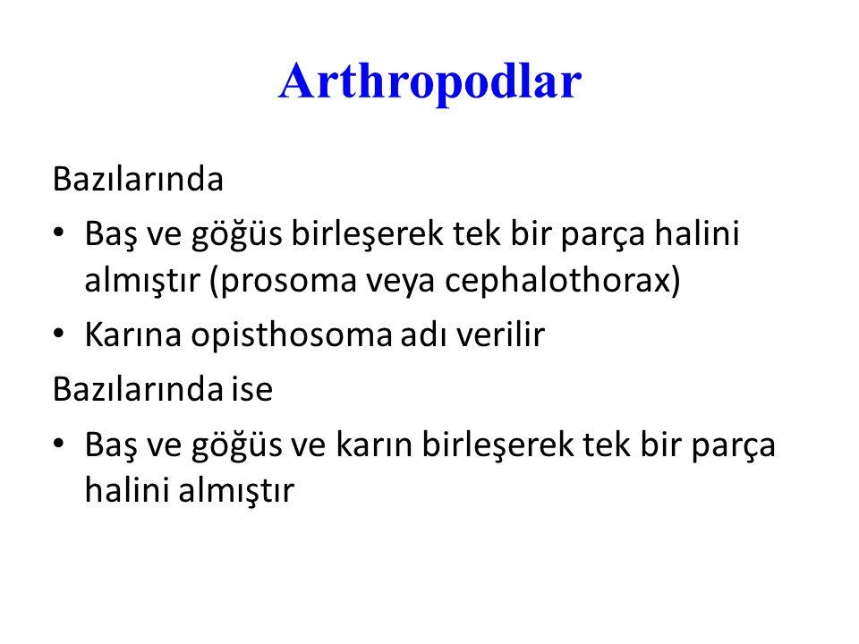 Arthropodlar Bazılarında