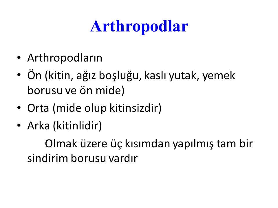 Arthropodlar Arthropodların