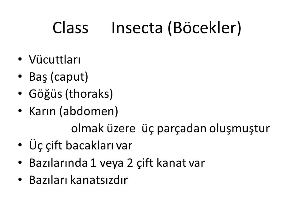 Class Insecta (Böcekler)