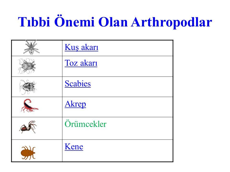 Tıbbi Önemi Olan Arthropodlar