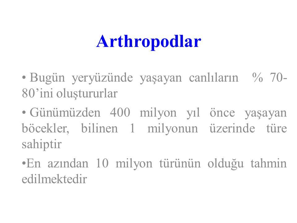 Arthropodlar Bugün yeryüzünde yaşayan canlıların % 70-80'ini oluştururlar.