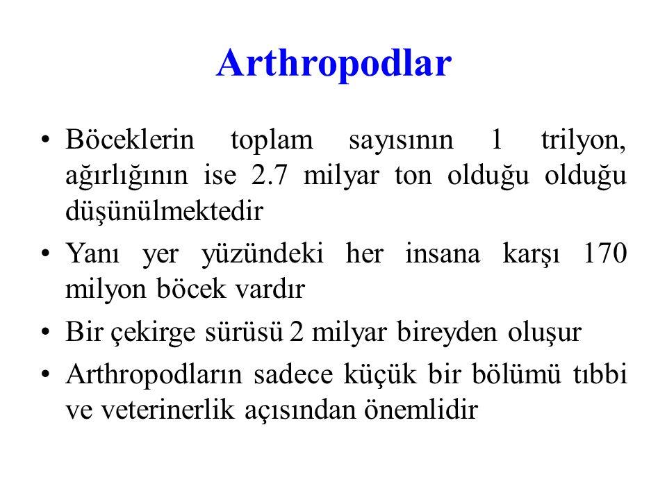 Arthropodlar Böceklerin toplam sayısının 1 trilyon, ağırlığının ise 2.7 milyar ton olduğu olduğu düşünülmektedir.