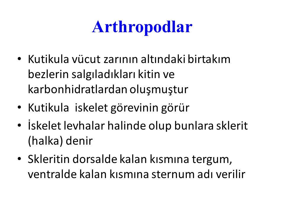 Arthropodlar Kutikula vücut zarının altındaki birtakım bezlerin salgıladıkları kitin ve karbonhidratlardan oluşmuştur.