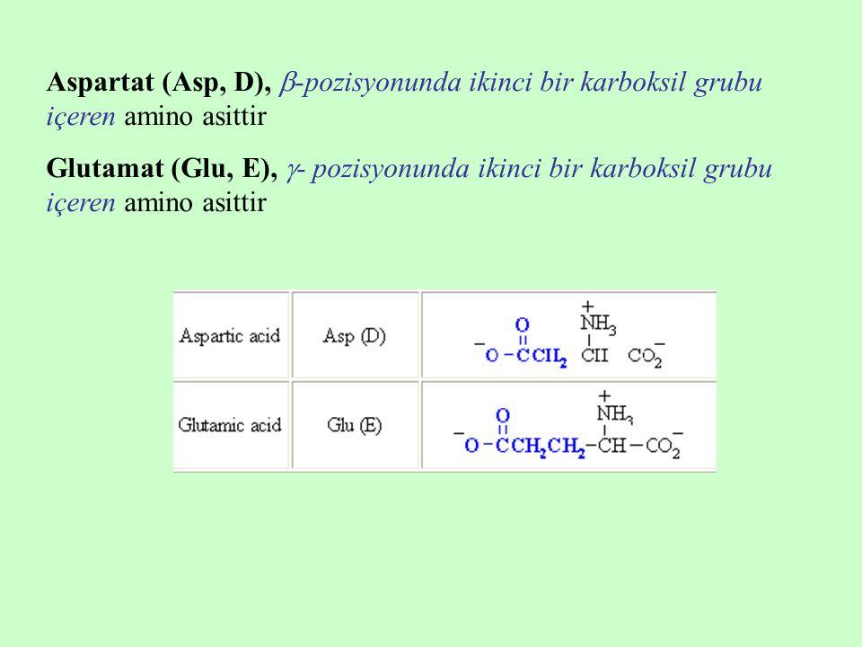 Aspartat (Asp, D), -pozisyonunda ikinci bir karboksil grubu içeren amino asittir