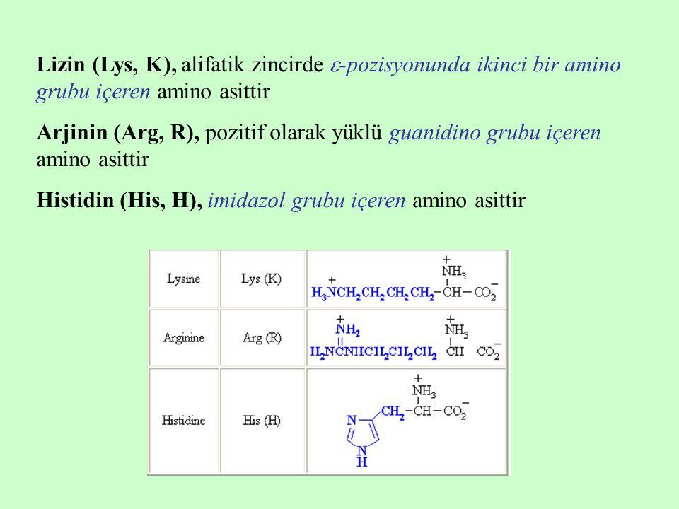 Lizin (Lys, K), alifatik zincirde -pozisyonunda ikinci bir amino grubu içeren amino asittir