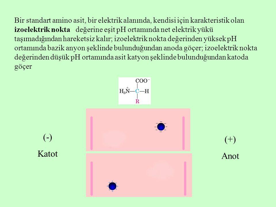 Bir standart amino asit, bir elektrik alanında, kendisi için karakteristik olan izoelektrik nokta değerine eşit pH ortamında net elektrik yükü taşımadığından hareketsiz kalır; izoelektrik nokta değerinden yüksek pH ortamında bazik anyon şeklinde bulunduğundan anoda göçer; izoelektrik nokta değerinden düşük pH ortamında asit katyon şeklinde bulunduğundan katoda göçer