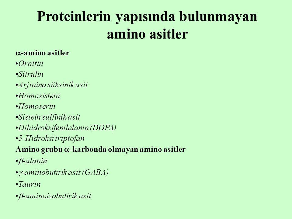 Proteinlerin yapısında bulunmayan amino asitler