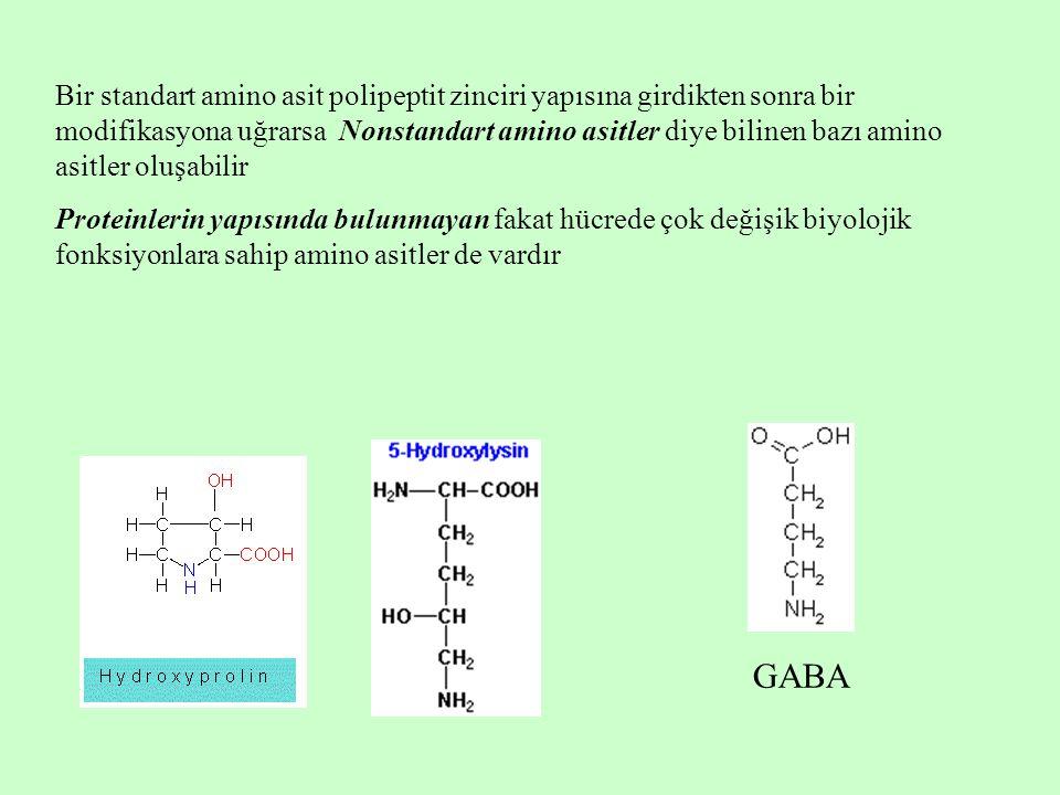 Bir standart amino asit polipeptit zinciri yapısına girdikten sonra bir modifikasyona uğrarsa Nonstandart amino asitler diye bilinen bazı amino asitler oluşabilir