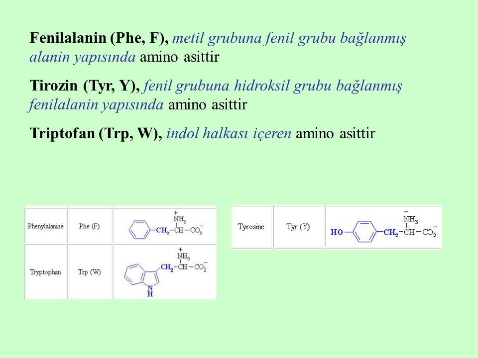 Fenilalanin (Phe, F), metil grubuna fenil grubu bağlanmış alanin yapısında amino asittir