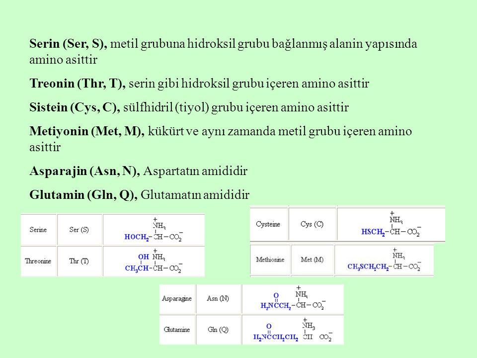 Serin (Ser, S), metil grubuna hidroksil grubu bağlanmış alanin yapısında amino asittir