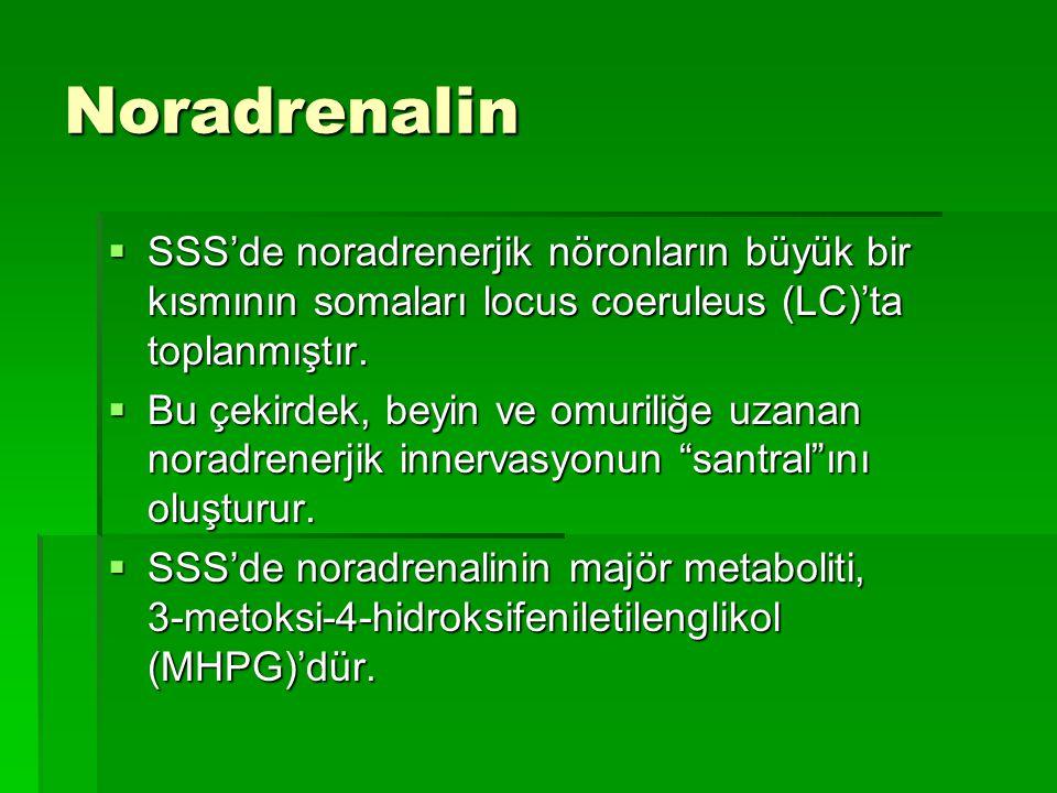 Noradrenalin SSS'de noradrenerjik nöronların büyük bir kısmının somaları locus coeruleus (LC)'ta toplanmıştır.