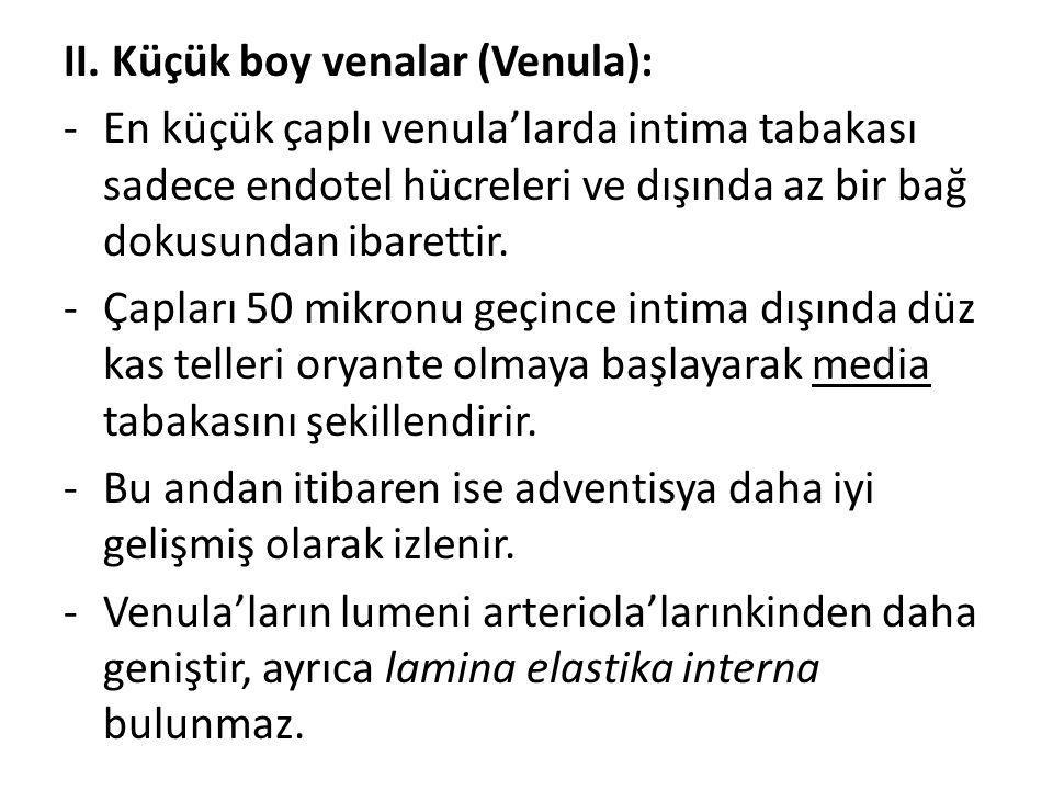 II. Küçük boy venalar (Venula):