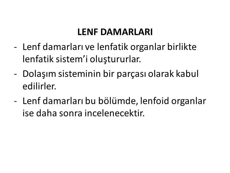 LENF DAMARLARI Lenf damarları ve lenfatik organlar birlikte lenfatik sistem'i oluştururlar. Dolaşım sisteminin bir parçası olarak kabul edilirler.