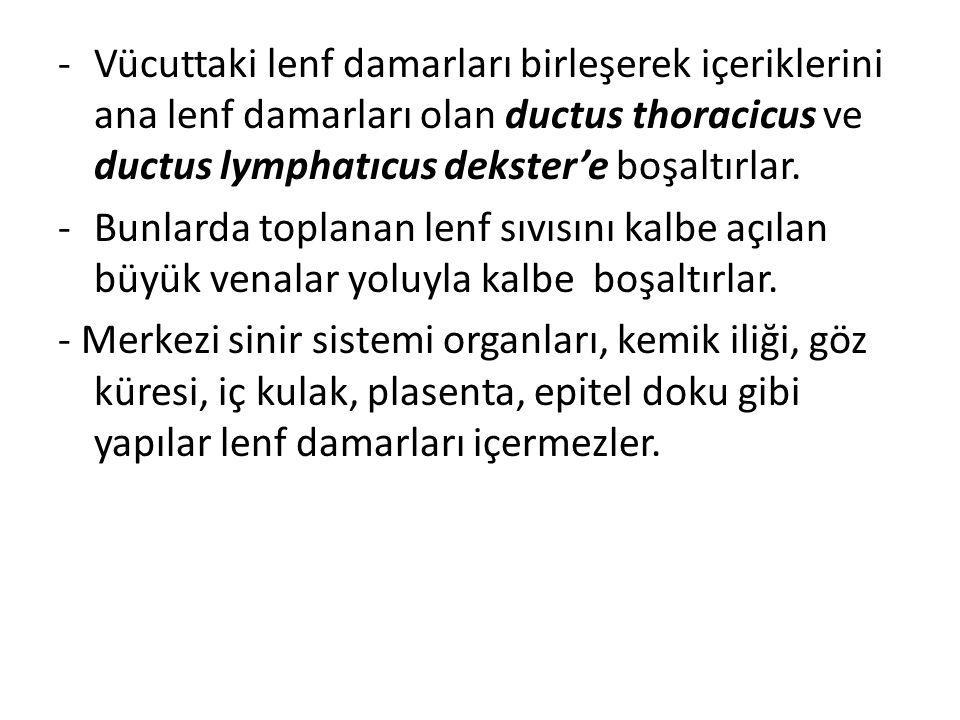 Vücuttaki lenf damarları birleşerek içeriklerini ana lenf damarları olan ductus thoracicus ve ductus lymphatıcus dekster'e boşaltırlar.