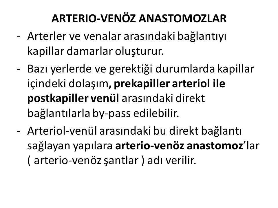ARTERIO-VENÖZ ANASTOMOZLAR