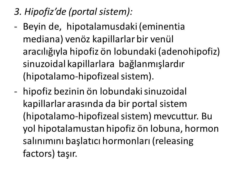 3. Hipofiz'de (portal sistem):