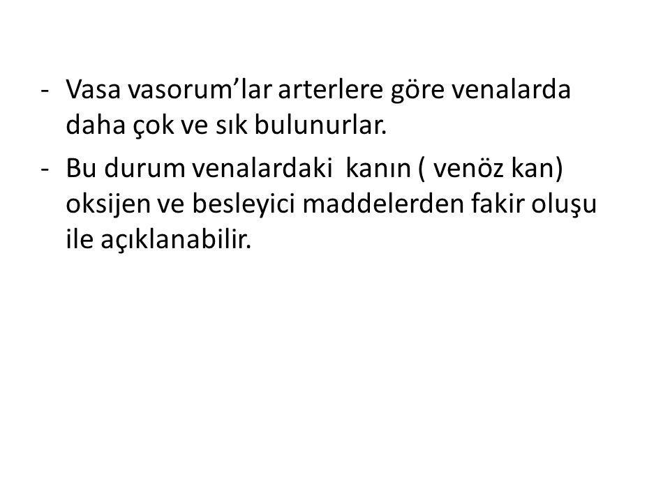 Vasa vasorum'lar arterlere göre venalarda daha çok ve sık bulunurlar.