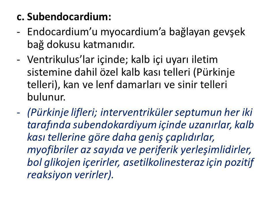 c. Subendocardium: Endocardium'u myocardium'a bağlayan gevşek bağ dokusu katmanıdır.