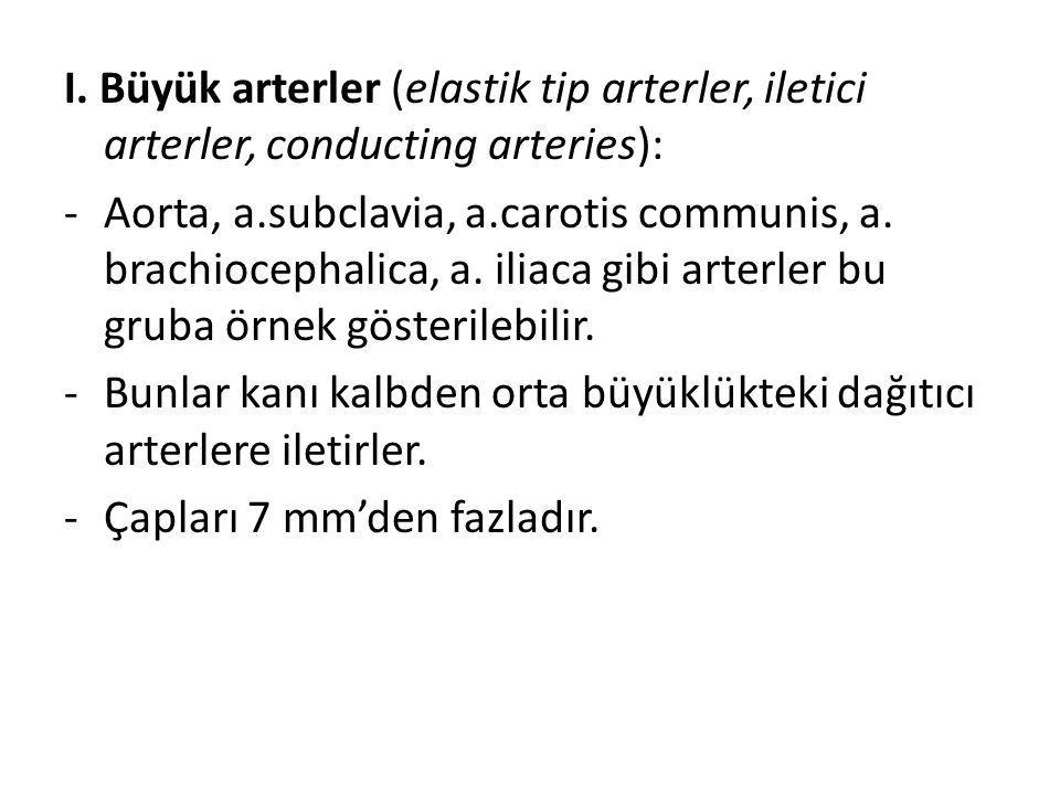 I. Büyük arterler (elastik tip arterler, iletici arterler, conducting arteries):